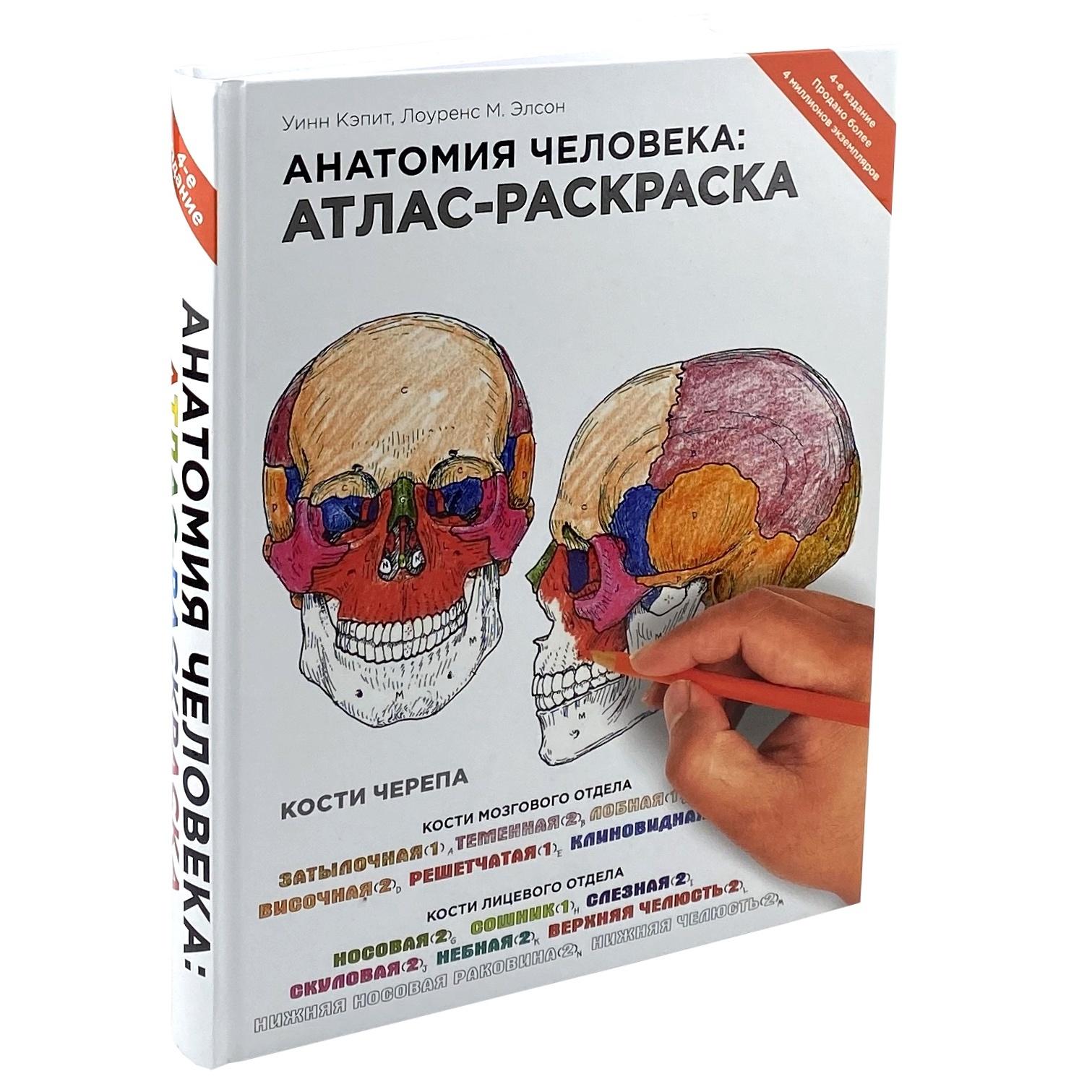 Анатомия человека. Атлас-раскраска. Автор — Уинн Кэпит, Лоуренс М. Элсон. Переплет —
