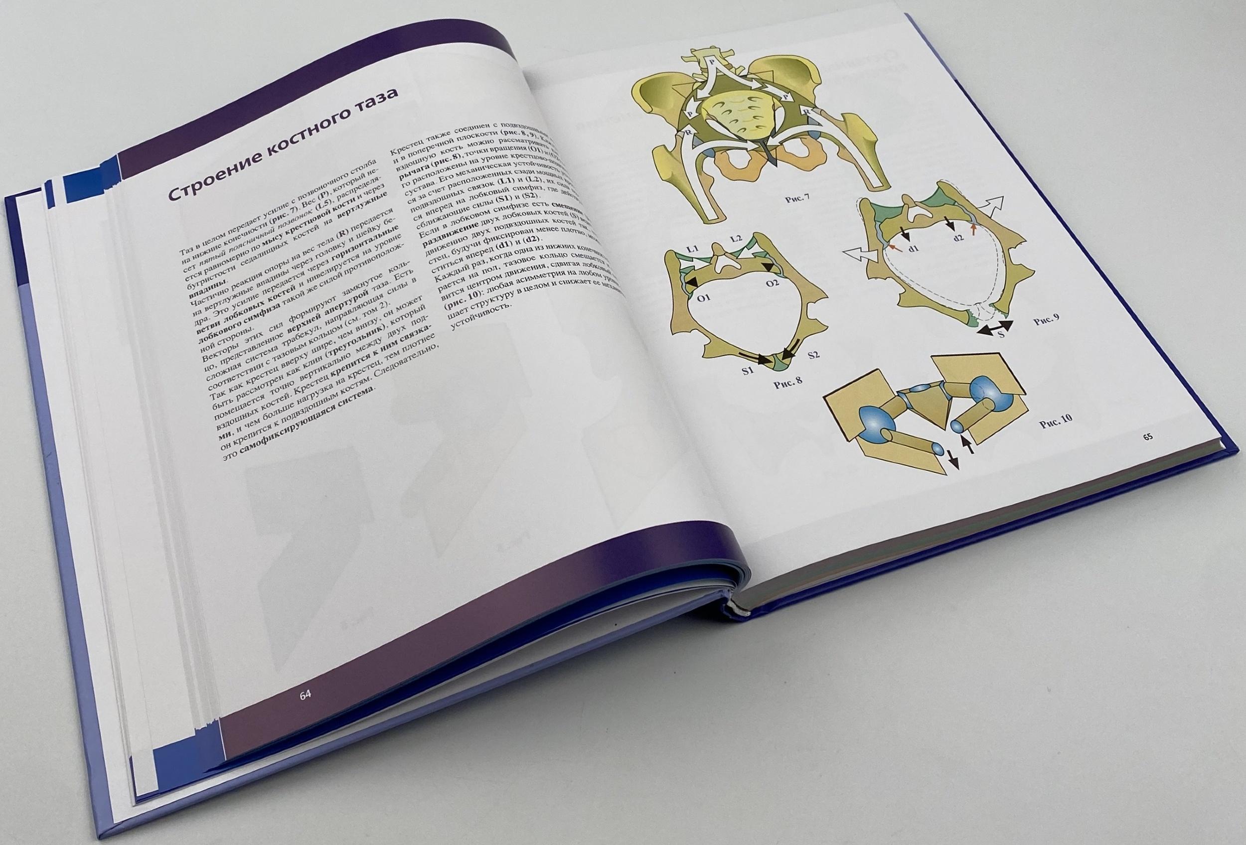 Позвоночник. Физиология суставов. Автор — Адальберт И. Капанджи.